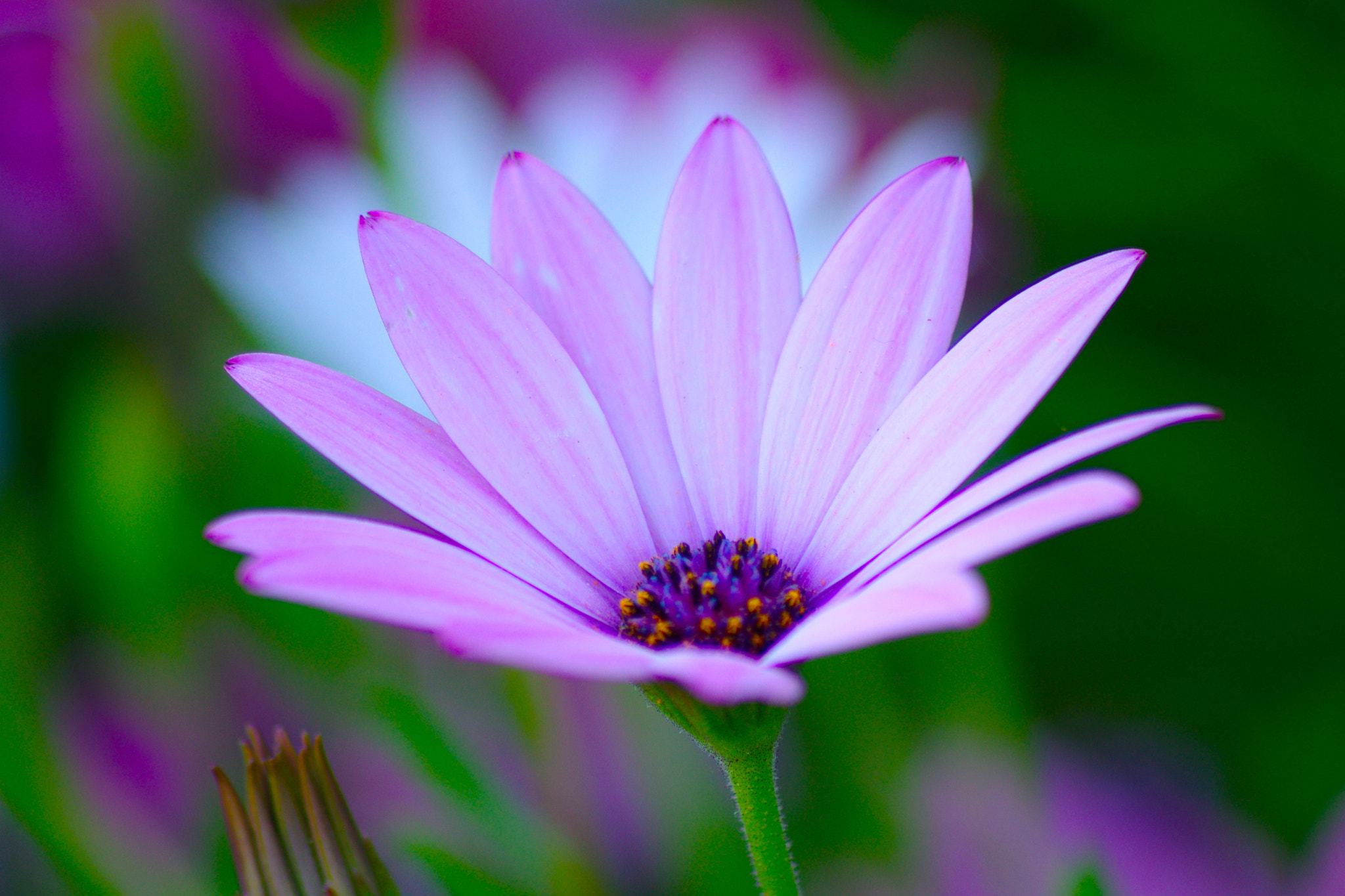 Photograph Pink fever by Vincent Dubarry on 500px