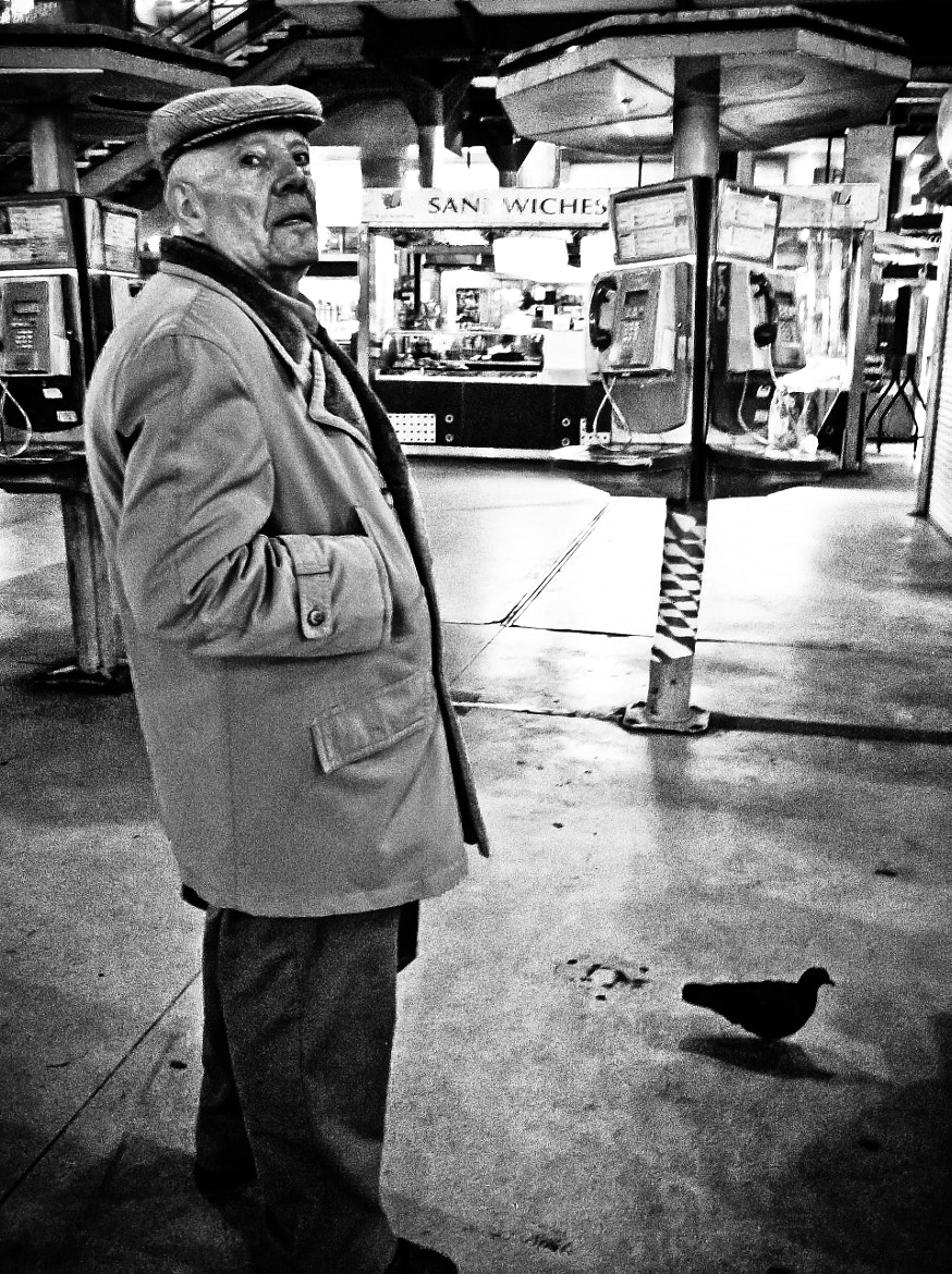 Photograph pigeon man by Fokko Muller on 500px