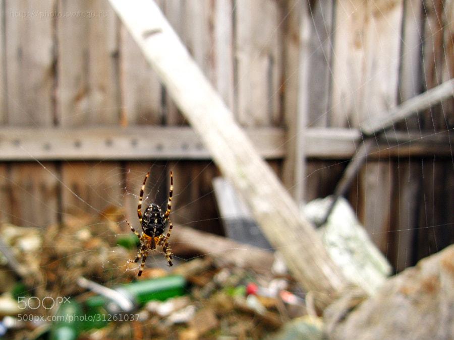 Spider by Tolik Maltsev on 500px.com
