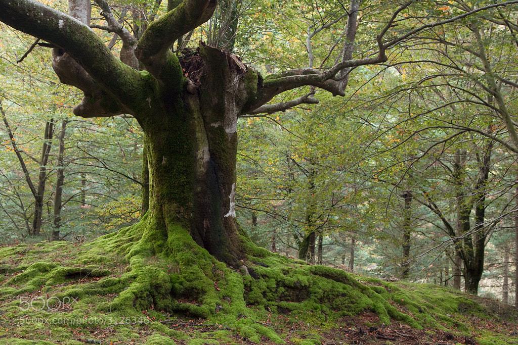 Photograph Retrato arbóreo by Andoni Lamborena on 500px