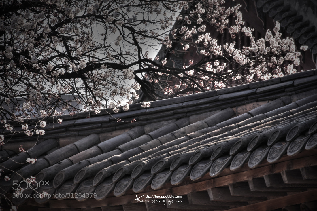 Photograph Spring came to the Palace by kim seong-geun on 500px