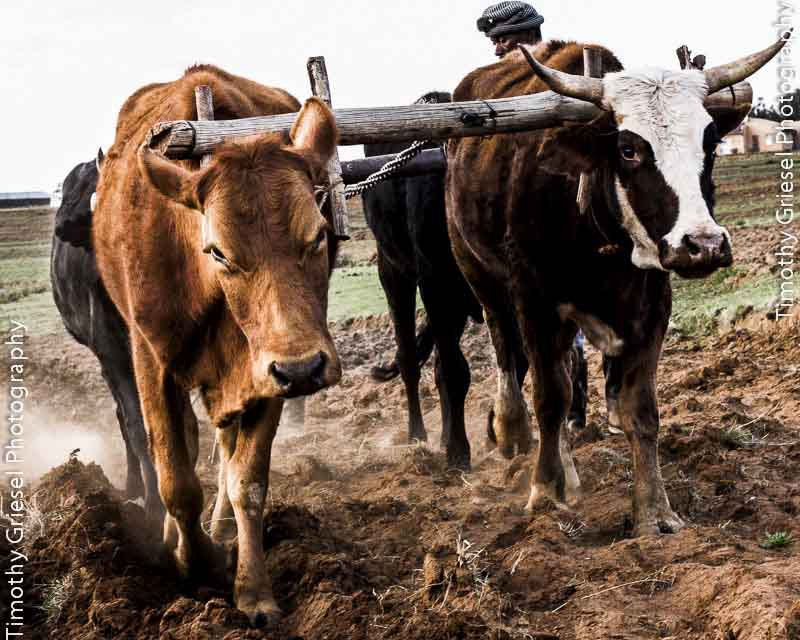Photograph Plough by Timothy Griesel on 500px