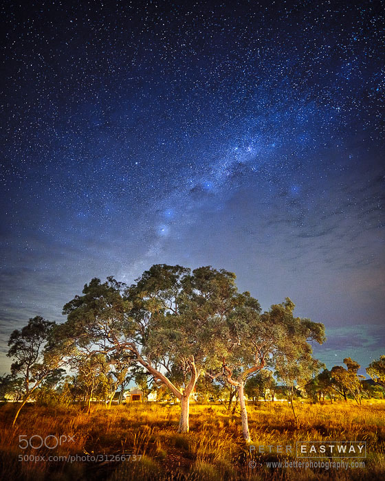 Photograph Trees At Night by Peter Eastway on 500px