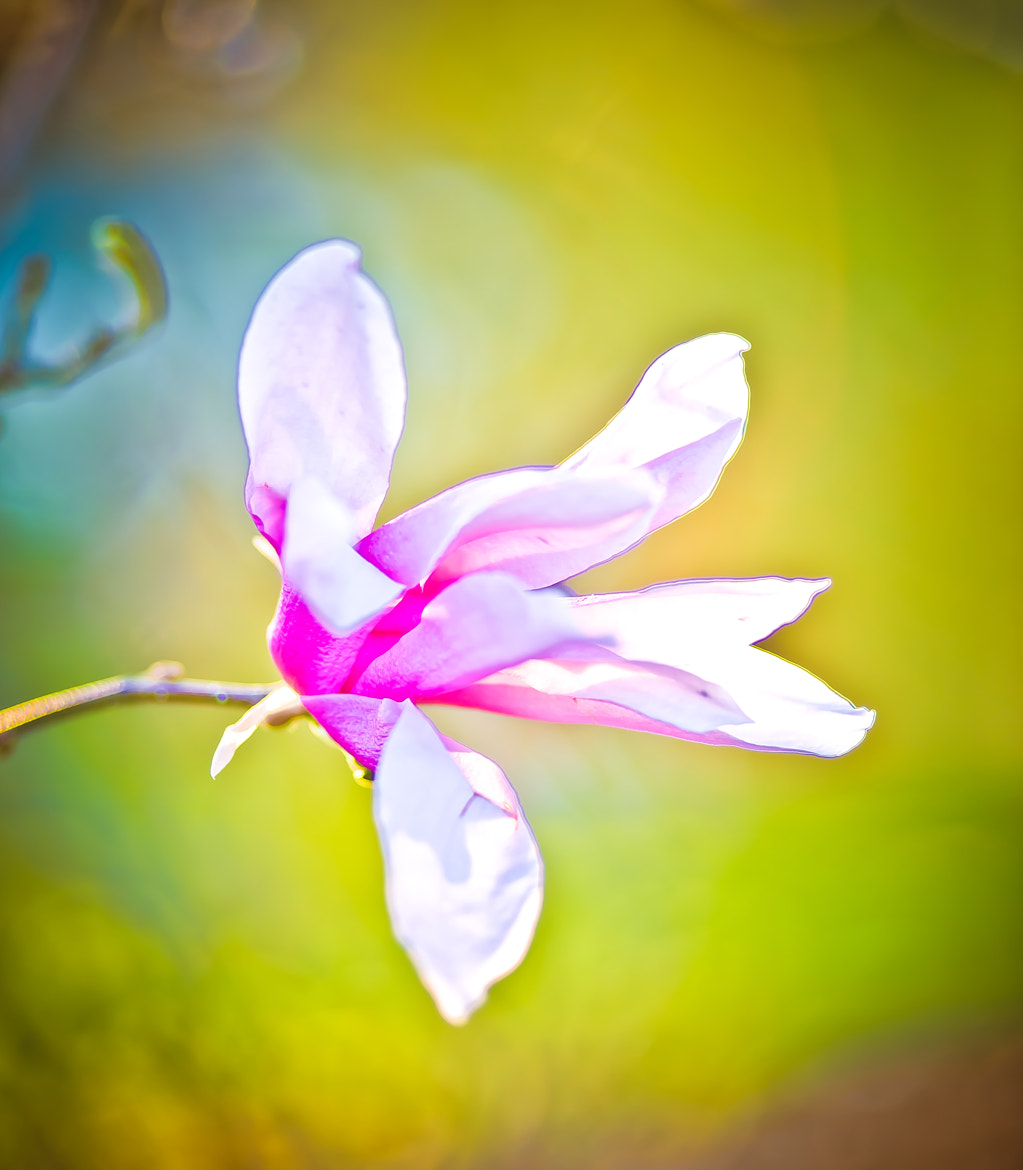 Photograph Pink Blossom ii by Jayanth Kommidi on 500px