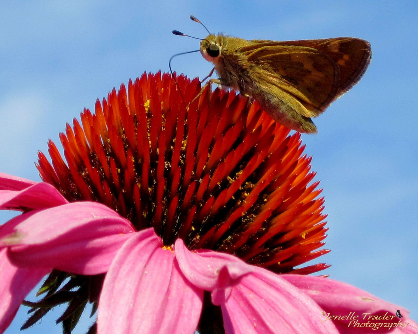 Photograph Brown Moth by Jenelle  Trader on 500px