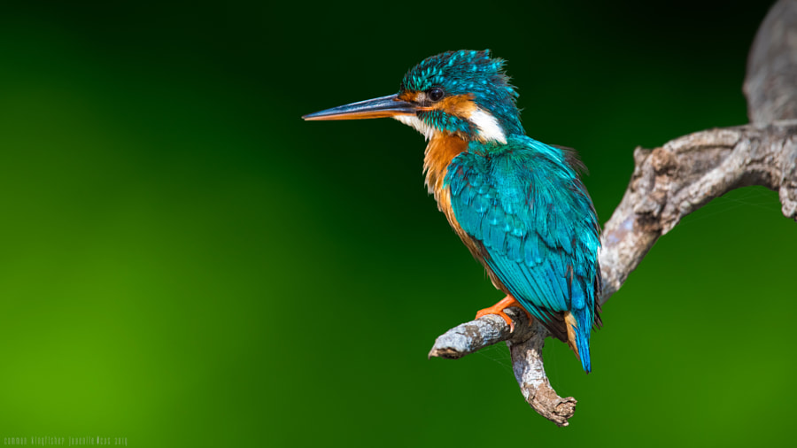 The King of Good Times ! by Sunil