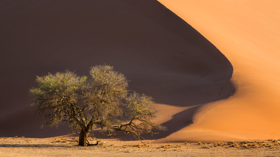 The end of a dune by Michael Voss