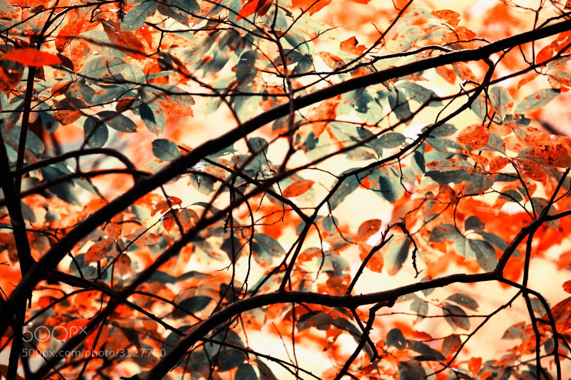 Photograph Fall abstract by Allen Miller on 500px