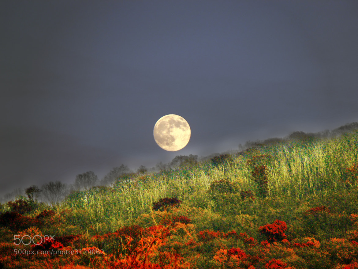 Photograph Moon Rising by Cameron Nelson on 500px