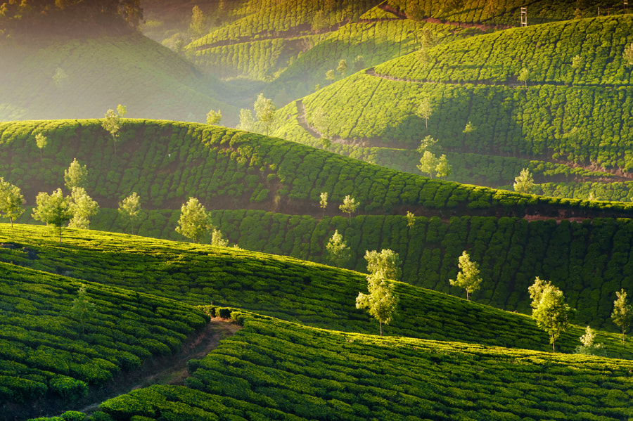 Photograph Magic Munnar by Nastya Gooz on 500px