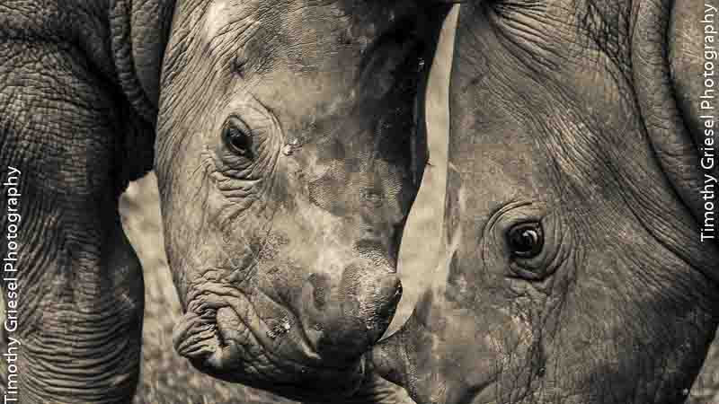 Photograph Rhino by Timothy Griesel on 500px