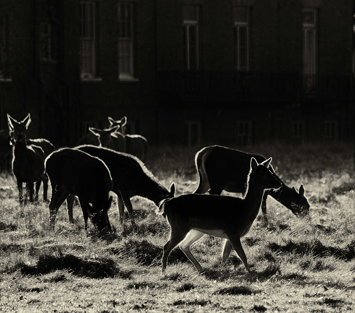 Photograph deers of bushy park  by Hegel Jorge on 500px
