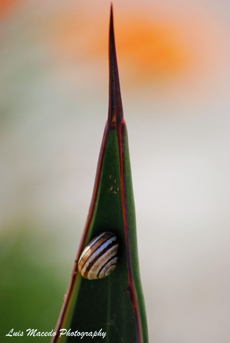 Photograph The Hiden Snail by Luis Pereira on 500px