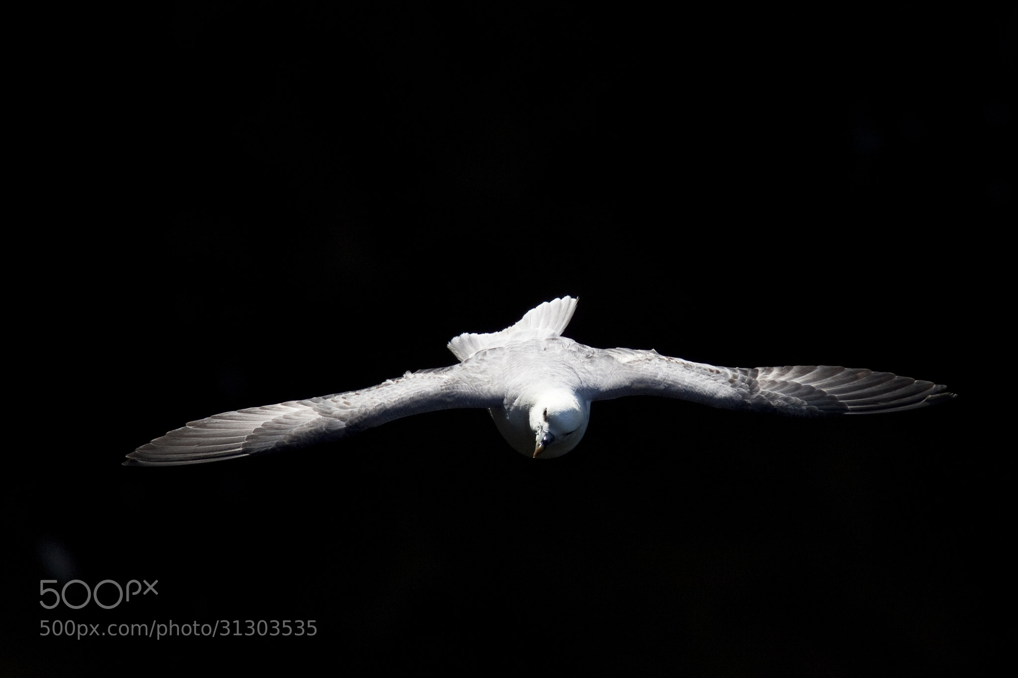 Photograph Wings session ! by richaix . on 500px