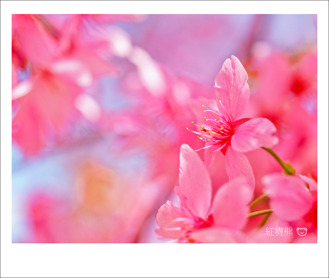 Photograph Pink by Kyle Lin on 500px