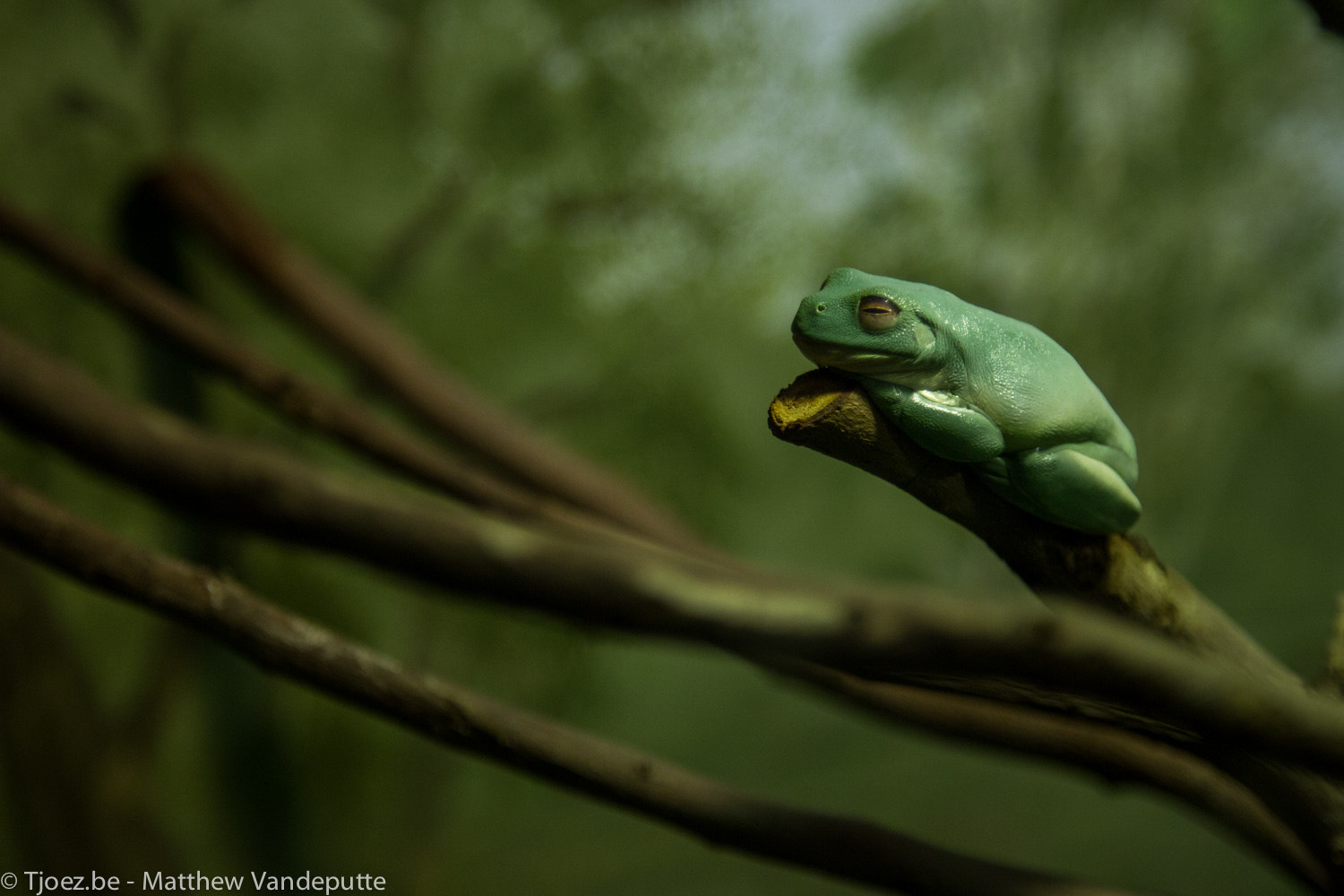 Photograph Frog by Matthew Vandeputte on 500px