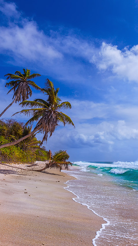 Photograph tropical beach by Dmitry Laudin on 500px