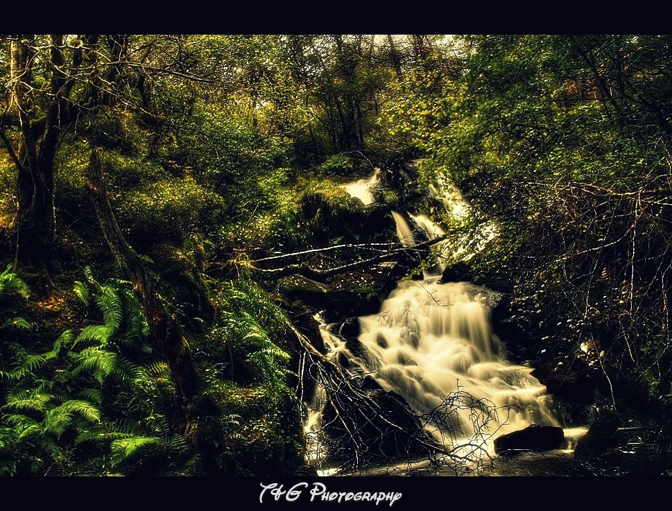 Photograph ferns and falls by T&G Photography  on 500px