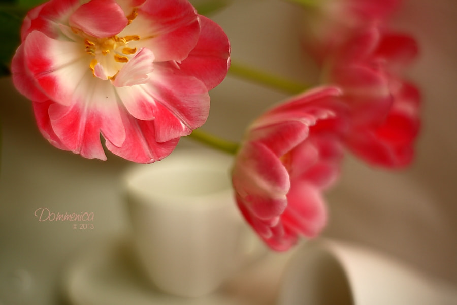 Photograph Tulips by Dommenica on 500px