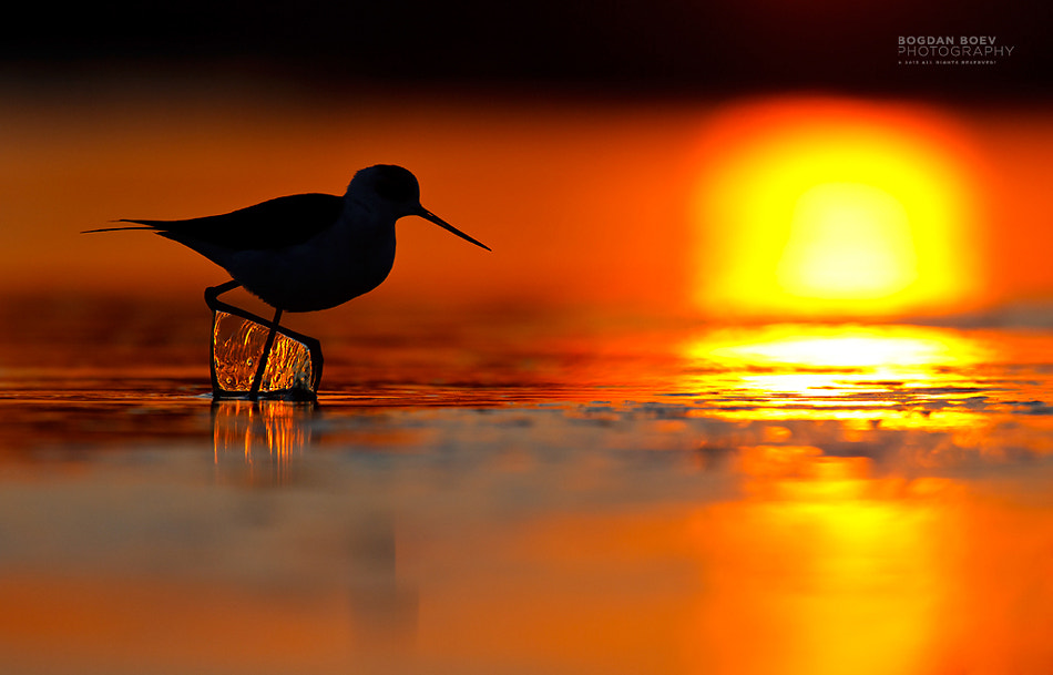 Photograph Facing the sunset by Bogdan Boev on 500px