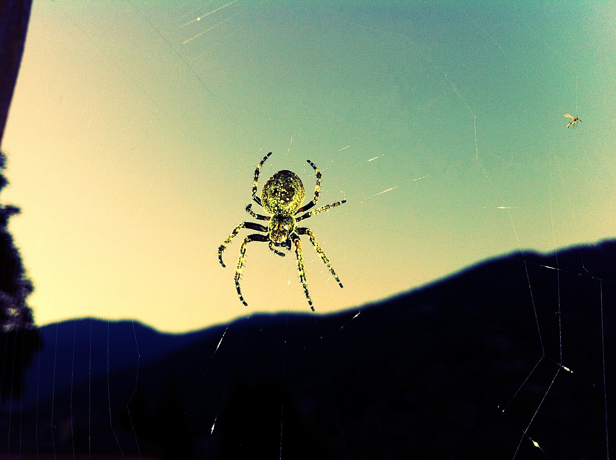 Photograph Golden spider by Luca F MG on 500px