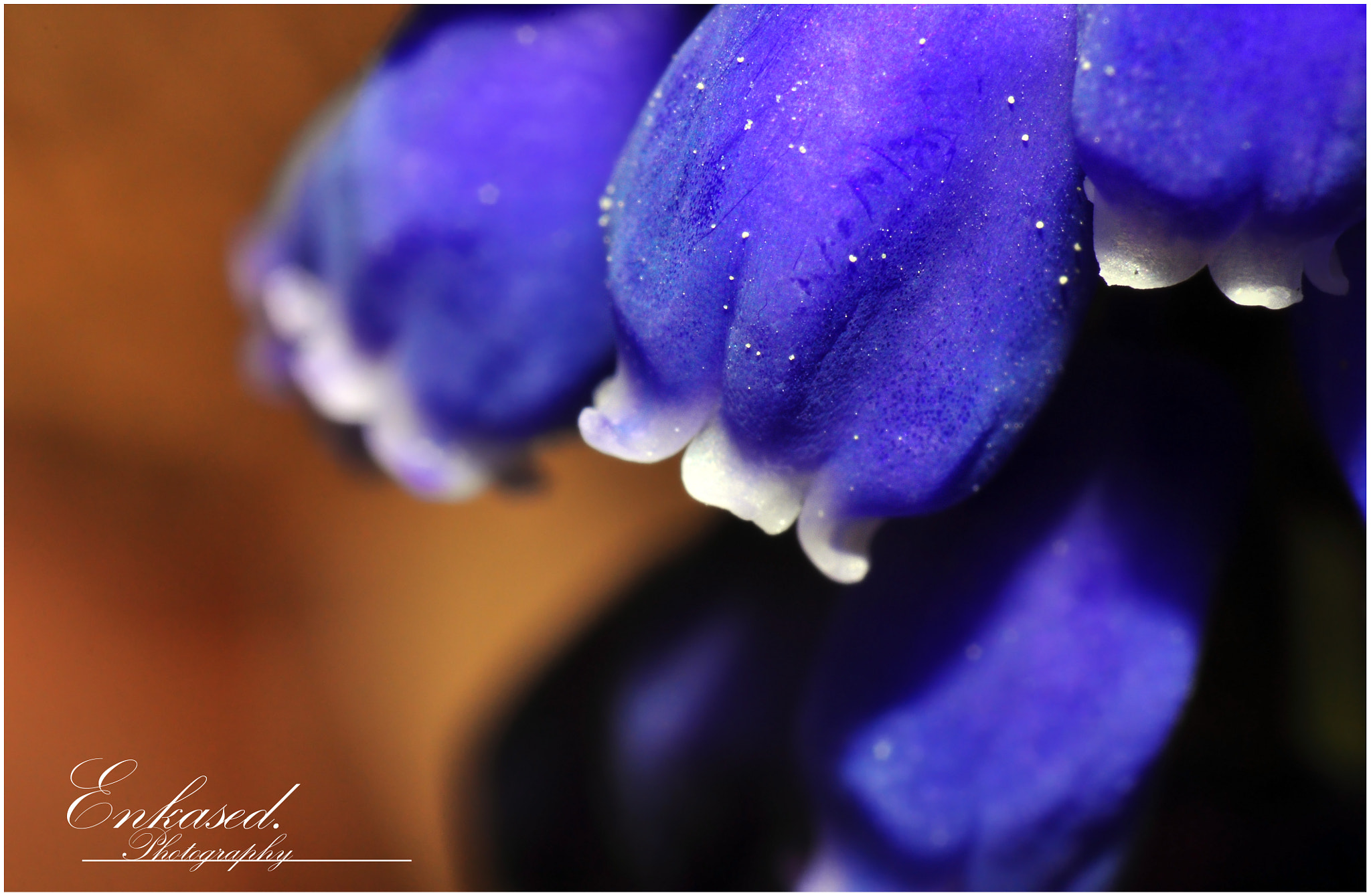 Photograph Purple Bell by Enkased  on 500px
