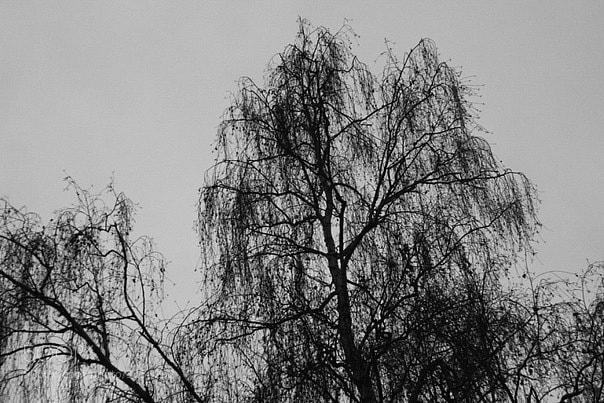 Photograph Untitled by Alena Klimashova on 500px