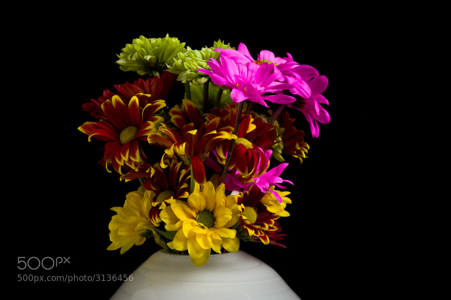 Photograph Bouquet by Mike Bowzeylo on 500px