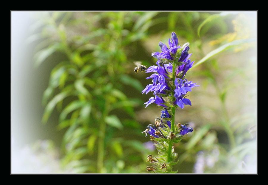 Pollination II