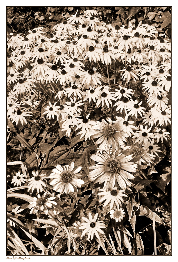 Garden Flowers II