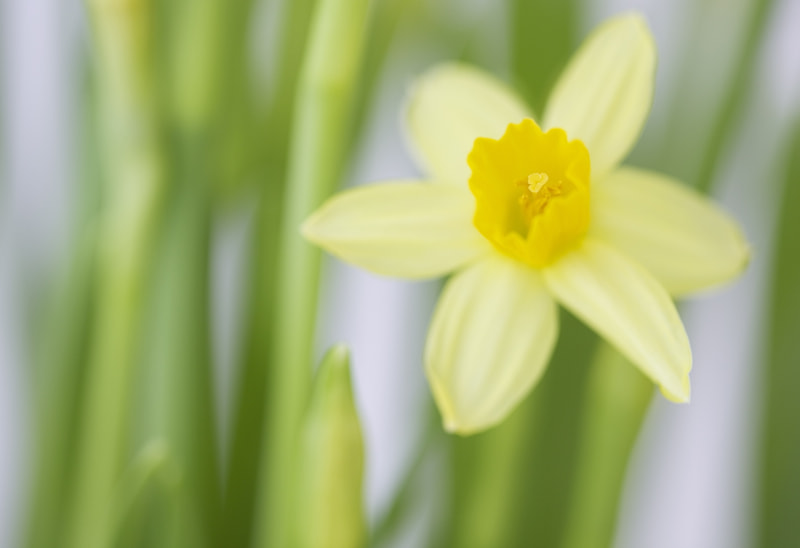 Photograph Spring Beauty by Daisy Kwan on 500px