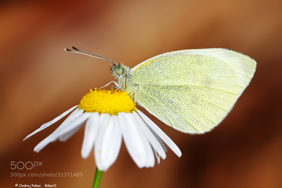 Photograph White by Ondrej Pakan on 500px
