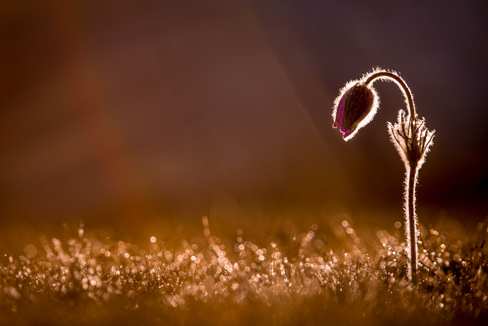Photograph In the first sunrays by Didier Dumoulin on 500px