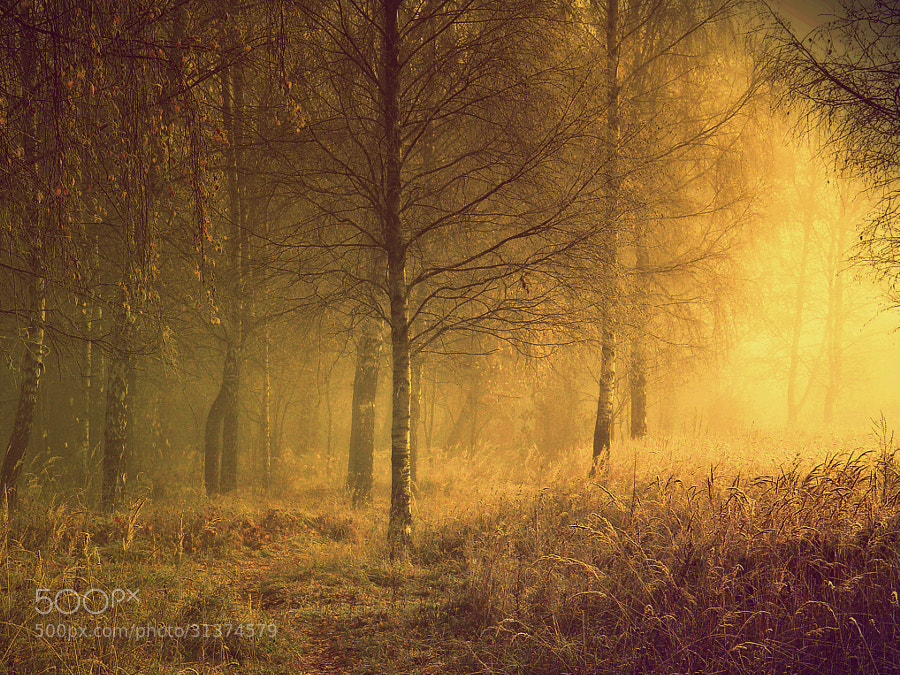 Autumn Portrait by **R**  (ginaups)) on 500px.com