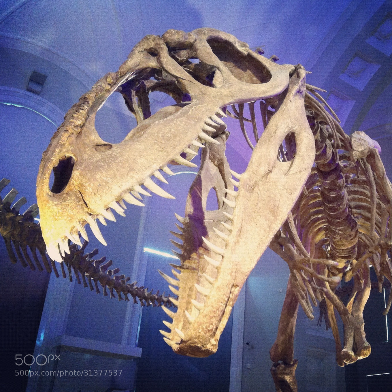 Photograph T-Rex by Hanan Lehr on 500px