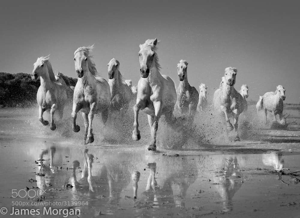 Photograph Charging White Horses by James Morgan on 500px