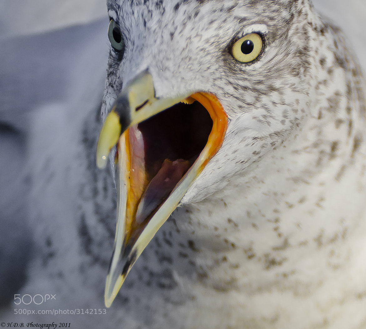 Photograph Big Mouth by Harold Begun on 500px