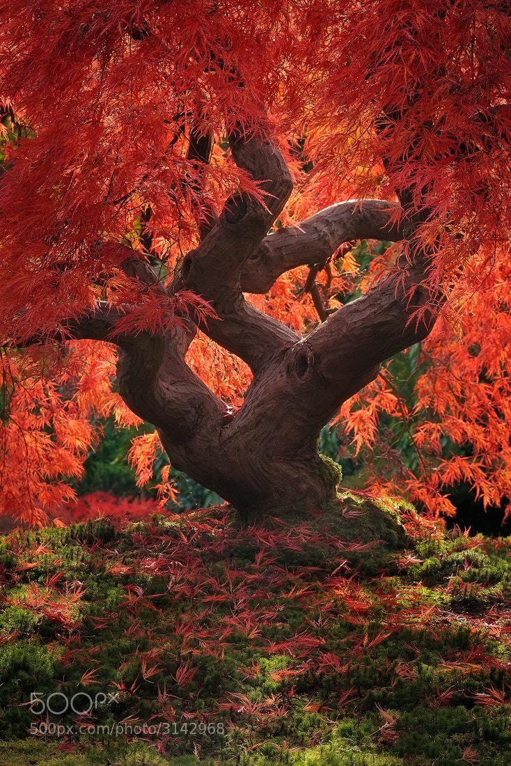 Photograph Dragon Tree... by Jeremy Cram on 500px