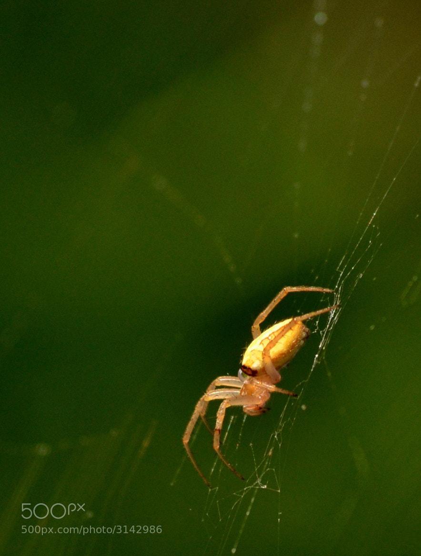 Photograph Spider's web by Duane Ramirez on 500px