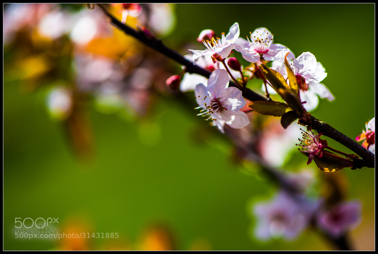 Photograph Spring by Inan Aksoy on 500px