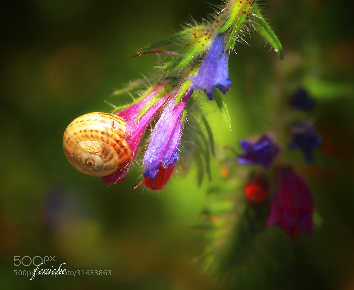 Photograph caracol by feniche  fernando on 500px