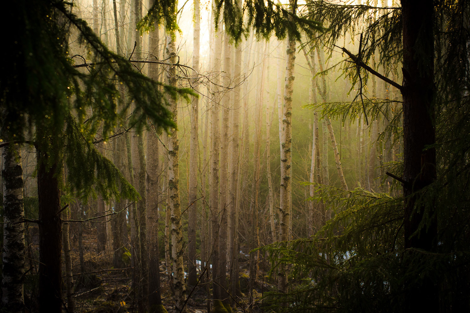 Photograph The woods by Ulf Bjolin on 500px