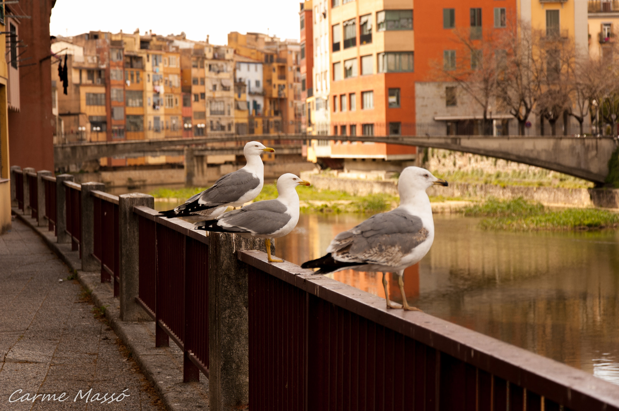 Photograph Untitled by Carme Massó on 500px