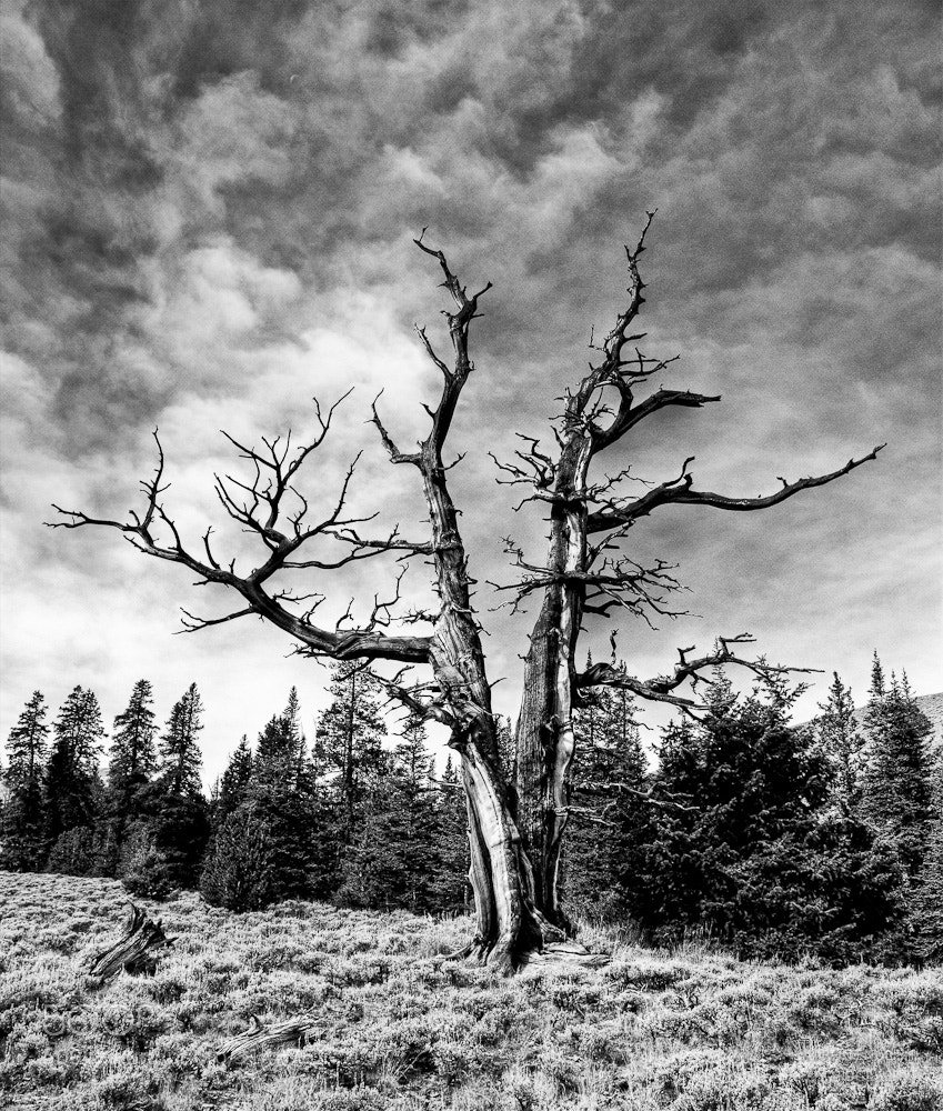 Photograph Snag by Aaron English on 500px