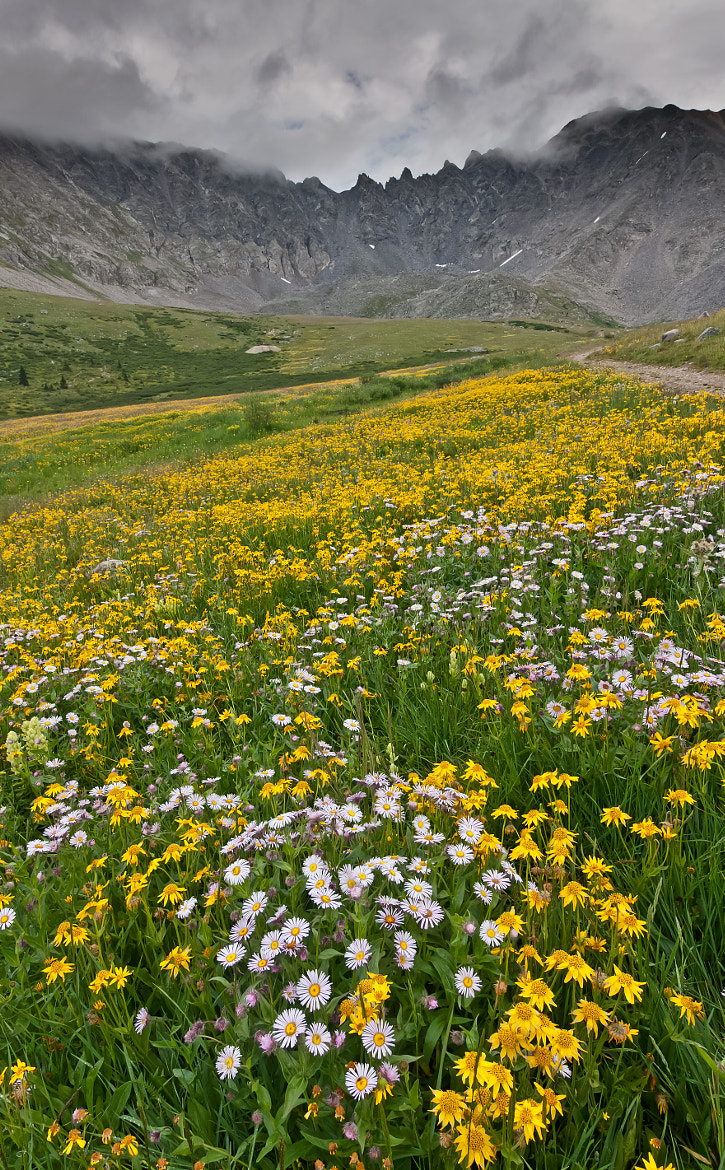Photograph Meadow of Flowers by Manju Kumar on 500px