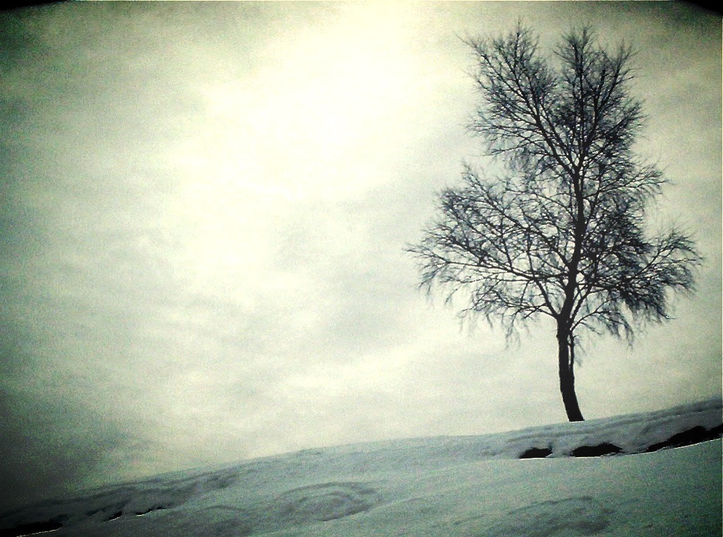 Photograph A tree... by Angelo Poletti on 500px