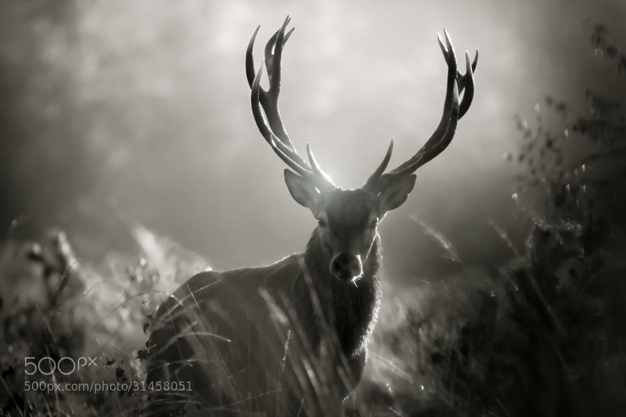 Photograph face to face bw by Nicolas Le Boulanger on 500px