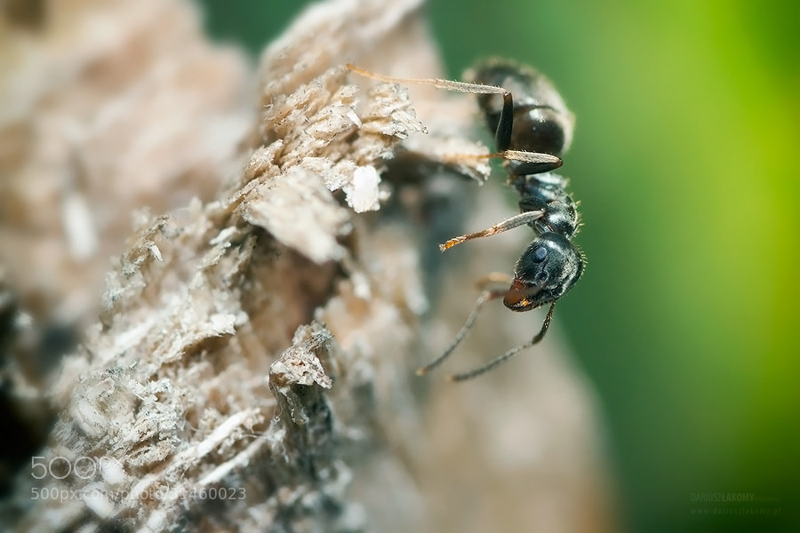 Photograph anty by Dariusz Łakomy on 500px