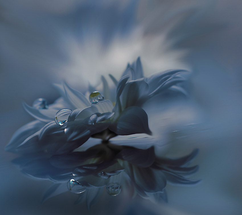 Photograph Behind Closed Eyes... by Juliana Nan on 500px
