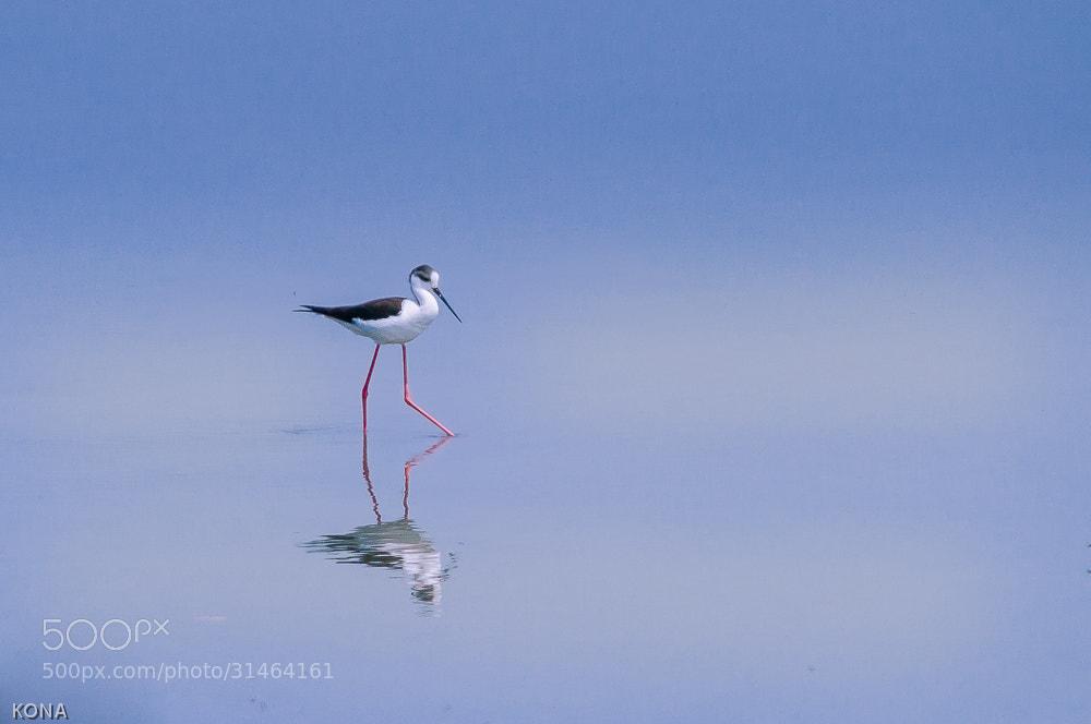 Photograph Untitled by Toru Kona on 500px